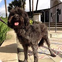 Adopt A Pet :: Cory - Austin, TX