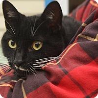 Adopt A Pet :: Bebe 2 - Angola, IN
