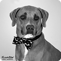 Adopt A Pet :: Hunter - Santa Maria, CA