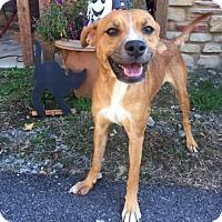 Adopt A Pet :: Sylvia - Hamilton, GA