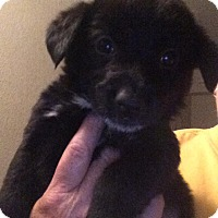 Adopt A Pet :: Aria - Cave Creek, AZ