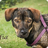 Adopt A Pet :: Sophie - San Juan Capistrano, CA