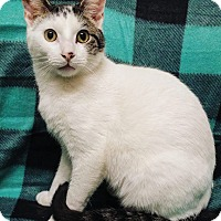 Adopt A Pet :: Flynn - Cannelton, IN