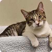 Adopt A Pet :: Carmichael - Chicago, IL