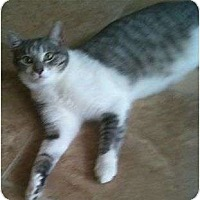 Adopt A Pet :: Shiloh - Schertz, TX