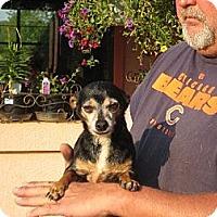 Adopt A Pet :: Abuelo - Salem, NH