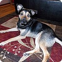 Adopt A Pet :: Maggie - Morgantown, WV