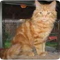Adopt A Pet :: Mandy & Mindy - Davis, CA