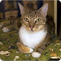 Adopt A Pet :: Angelina - New Port Richey, FL