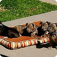 Adopt A Pet :: PAMELA - Southampton, PA
