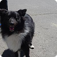 Adopt A Pet :: Christian - Calgary, AB