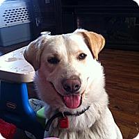 Adopt A Pet :: Winter - Saskatoon, SK