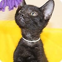 Adopt A Pet :: Dalton - North Highlands, CA