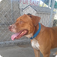 Adopt A Pet :: Andy - Eddy, TX