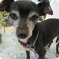 Adopt A Pet :: ANSEL - Elk Grove, CA