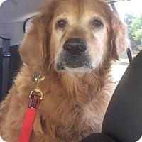 Adopt A Pet :: Lola II - BIRMINGHAM, AL