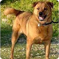 Adopt A Pet :: Sunshine - Newhall, CA