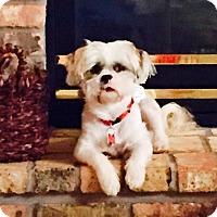 Adopt A Pet :: ISAAC-pending - Eden Prairie, MN