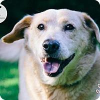 Adopt A Pet :: Andee - Jackson, TN