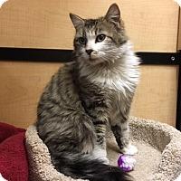Adopt A Pet :: Wynona - Riverside, CA