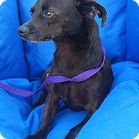 Adopt A Pet :: Axis - Rockaway, NJ