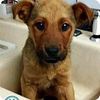 Adopt A Pet :: Abram - Kimberton, PA