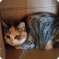 Adopt A Pet :: Geraldine- $25 adoption - Monterey, VA