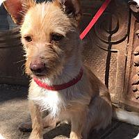 Adopt A Pet :: Argo - Santa Ana, CA