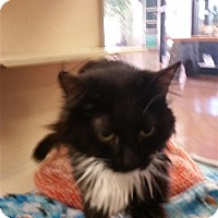 Adopt A Pet :: Mia - Sedona, AZ