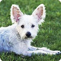 Adopt A Pet :: Liberty - San Diego, CA