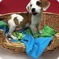 Adopt A Pet :: Baby Cakes - Decatur, AL