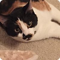 Adopt A Pet :: Lorelai - St. Louis, MO