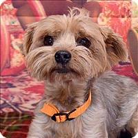 Adopt A Pet :: Tobie - Fort Davis, TX