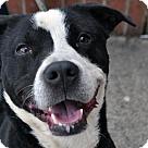 Adopt A Pet :: Cooperino