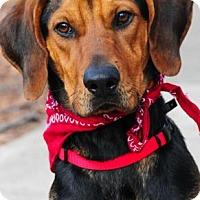 Adopt A Pet :: Cupid - Alpharetta, GA