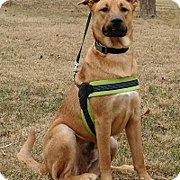 Adopt A Pet :: Chief - New Oxford, PA