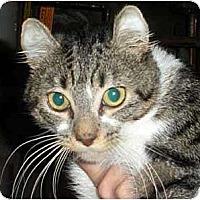 Adopt A Pet :: Logan - Brooklyn, NY