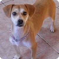 Adopt A Pet :: Christie - dewey, AZ