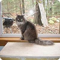 Adopt A Pet :: Asia - Portland, ME