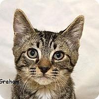 Adopt A Pet :: Graham - Sacramento, CA