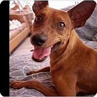 Adopt A Pet :: Dann Tanna - Phoenix, AZ
