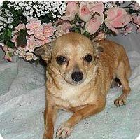 Adopt A Pet :: Peanut - Chandlersville, OH