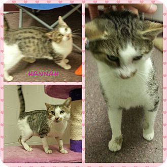 Cats For Adoption In Franklin County Nc
