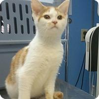 Adopt A Pet :: Buttercup - Cleveland, OH