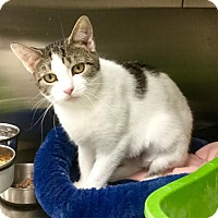 Adopt A Pet :: Lolita - Webster, MA