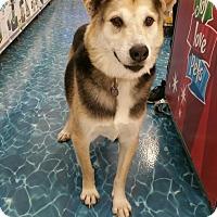 Adopt A Pet :: Tex - Ogden, UT