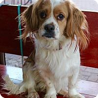Adopt A Pet :: Sebastian - Munster, IN