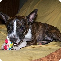 Adopt A Pet :: Lola King VA - various cities, FL