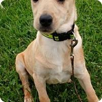Adopt A Pet :: Joey - Aurora, IL