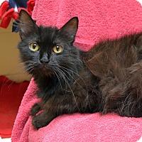 Adopt A Pet :: Maude - Wheaton, IL